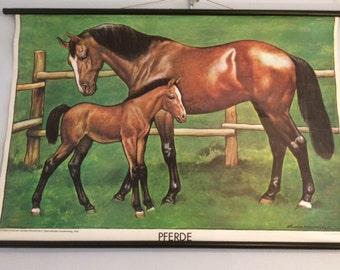 Vintage Educational Chart -- Horses