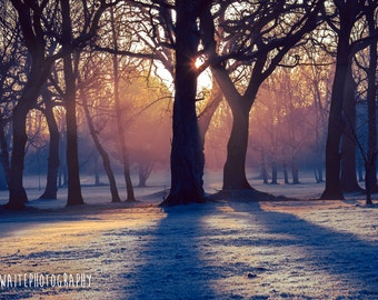Sunrise Through The Winter Trees Photograph Canvas Wall Art Print