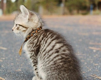 Tabby kitten cat photo photography print foresthis