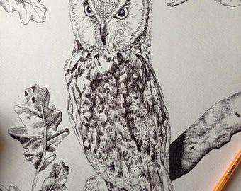 Original black pen drawing of an owl