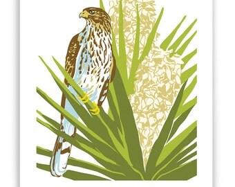 Cooper's Hawk in Flowering Yucca Art Reproduction
