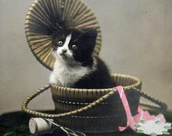 Antique cat photo postcard, Sewing basket, Antique sewing basket, Vintage kitten photo postcard, Cat RPPC, Vintage cat RPPC, Cat in basket