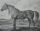 Horse Print Wellington's charger Copenhagen from Lithograph by James Ward with white core mount