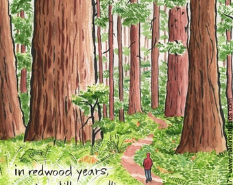 227. redwood forest birthday card - set of any 6 designs