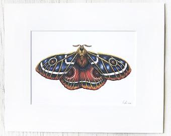 Matted Moth illustration, artist print, entomology study, coloful insect