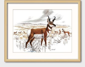 Antelope Art Print w/Mat -- Vintage Matted Pronghorn Artwork