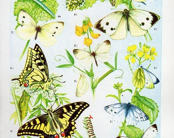 1960 Butterfly Print, plate 55 Vintage Antique Book Plate prints, 6 butterflies insects nature art illustrations