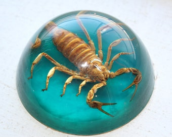 Real Scorpion Paperweight Vintage Insect In Lucite
