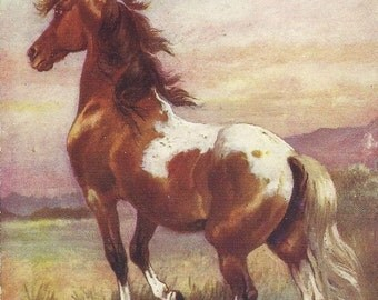 Wild Horse of the Prairie - Antique 1900s Tuck's Oilette Artist-signed Pinto Mustang Postcard