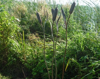 Metal Garden Bulrushes Set Of Three