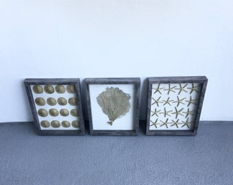 Set of 3 Framed gold starfish- sand dollar and sea fan in grey shadow box frame Set of 2. Beach chic