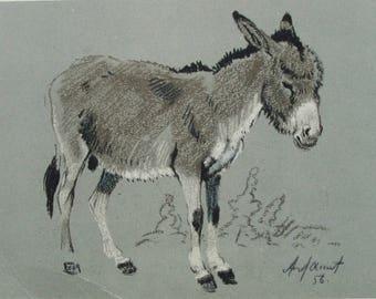 Baby Burro - Illustrator A. Laptev - Vintage Soviet Postcard, 1956. Sovetskiy hudozhnik. Donkey