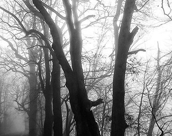 Trees on Foggy Morning Road Lambertville HD black and white photo print 8x10""