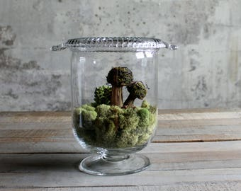Vintage Glass Terrarium / Container with Lid
