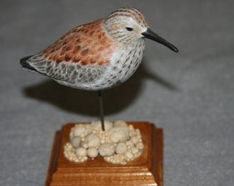 miniature Dunlin shorebird