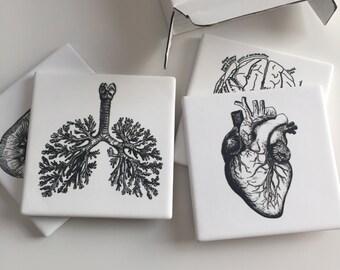 Anatomy Coasters, Set of 4 Coasters, Nurse Week Gift, Sandstone Anatomy Coasters, Vintage Anatomy Coasters