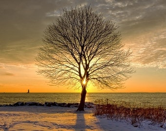 New Castle, New Hampshire Sunrise Framed by Winter Tree