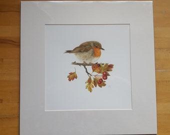 Robin on Hawthorn Mounted Giclee print