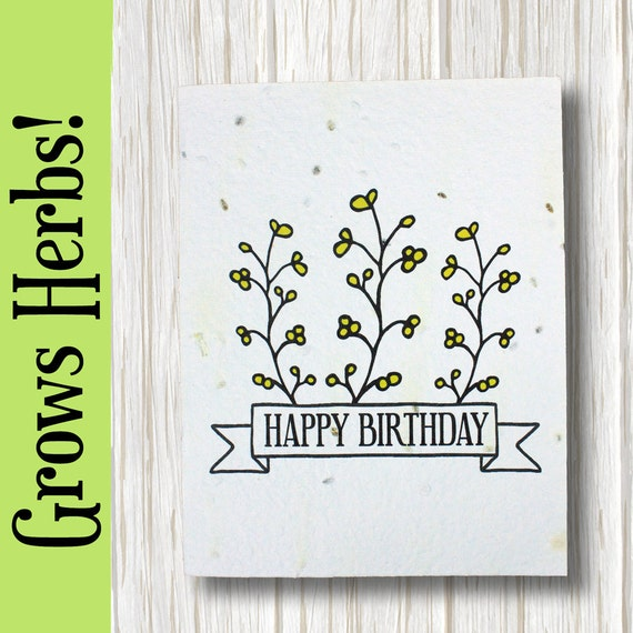GROWS Basil Parsley And Chive Happy Birthday