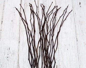 Honey Locust Branches without thorns - set of 20