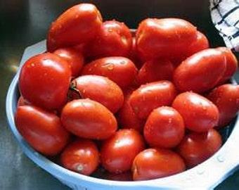 3 - Italian Roma Heirloom Tomato Plants