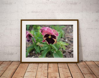 Purple Pansy Photo, Pansy Art Print, Colorful Flower Wall Art, Southern Garden, Spring Flower Print, Purple Flower Photo, FREE SHIPPING