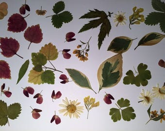Dried Pressed Leafs, Real Dried Pressed Flowers, Pressed Flowers for Craft