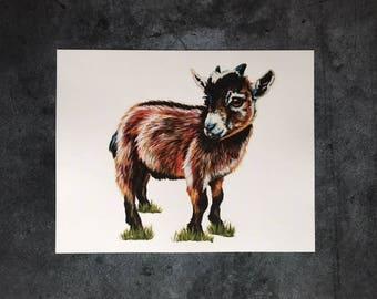 Ginger Goat - Art Print 11x14