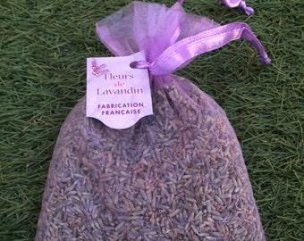 flower  of lavender