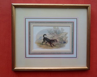 Vintage print of a dog (scotch terrier), framed and matted, signed in the print Lizars sc