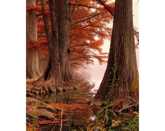 Autumn Colors, Sunrise Photography, Landscape Photography, Fog Photography,Texas Hill Country Photo, River Photography, Reflections, Garner