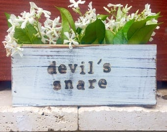 Harry Potter Planter featuring Devil's Snare