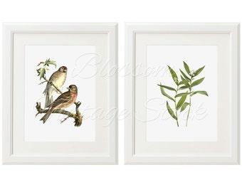 Vintage Printable Art, Botanical, Birds Illustrations INSTANT DOWNLOAD Digital Illustrations for Print 5x7, 8x10, 11x14 Included - 2035
