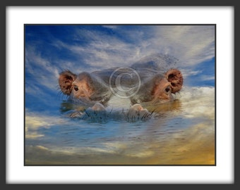 Hippo Photography-Hippo Heaven Color Photo for Commercial Use Digital Download