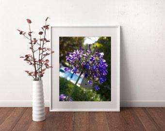 Purple Dream - Digital 8x10 Print