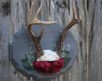 Mounted Deer Antlers with Floral Accents