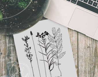 Botanical Line Drawing | Wildflower Illustration