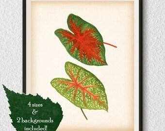Vintage botanical print, Botanical illustration, Leaf print, Antique art, Botanical printable art, Instant download, 8x10, 11x14, A3, A4 #80