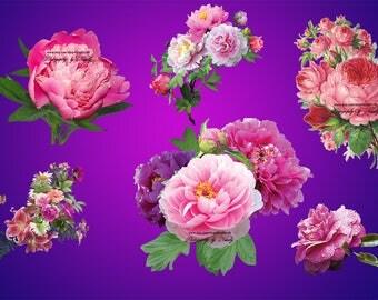 Watercolor peonies clip art floral clipart -  flowers clip art flowers overlay floral