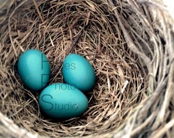 Blue Robin's Egg Nest Photograph Print Art 5x5, 5x7, 8x8, 8x10, 8x12 Bird Brown Wood Nature Rustic Farmhouse Kitchen Home Office