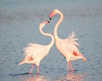NewShopSale Flamingos Love fine art photography print - gift lagoon bird sunset tropical art room blue pink home 4x4 4x6 10x10 8x10 12x16