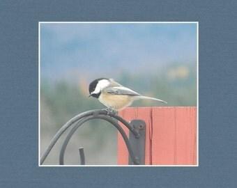 Chickadee - Matted Print