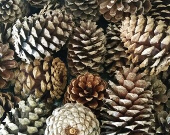 Pinecones / Bulk Pinecones for Your Crafting / VBS Projects / Baked Pinecones / Bug-Free Pinecones /Pinecone Crafts / Medium Pinecones
