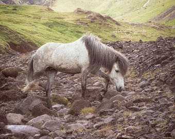The Journey of an Icelandic Horse - Horse Photography (Equine Fine Art Print)