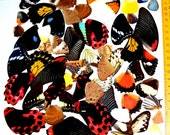 20 Real butterfly wing Assorted - Big wing, Medium wing, Small wing, Beautiful butterfly wing, mix butterfly wing, various butterfly wing