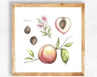 Peach Watercolor Print