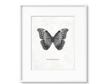 Vintage Art, Butterfly Art, Science Art, Black and White Print, Digital Download, Printable Art, Butterfly, Illustration, Art, Wall Decor