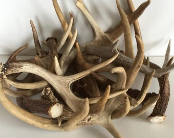 4lbs Real Raw Natural Deer Antlers Premium Grade for Home Projects and Rustic Decor