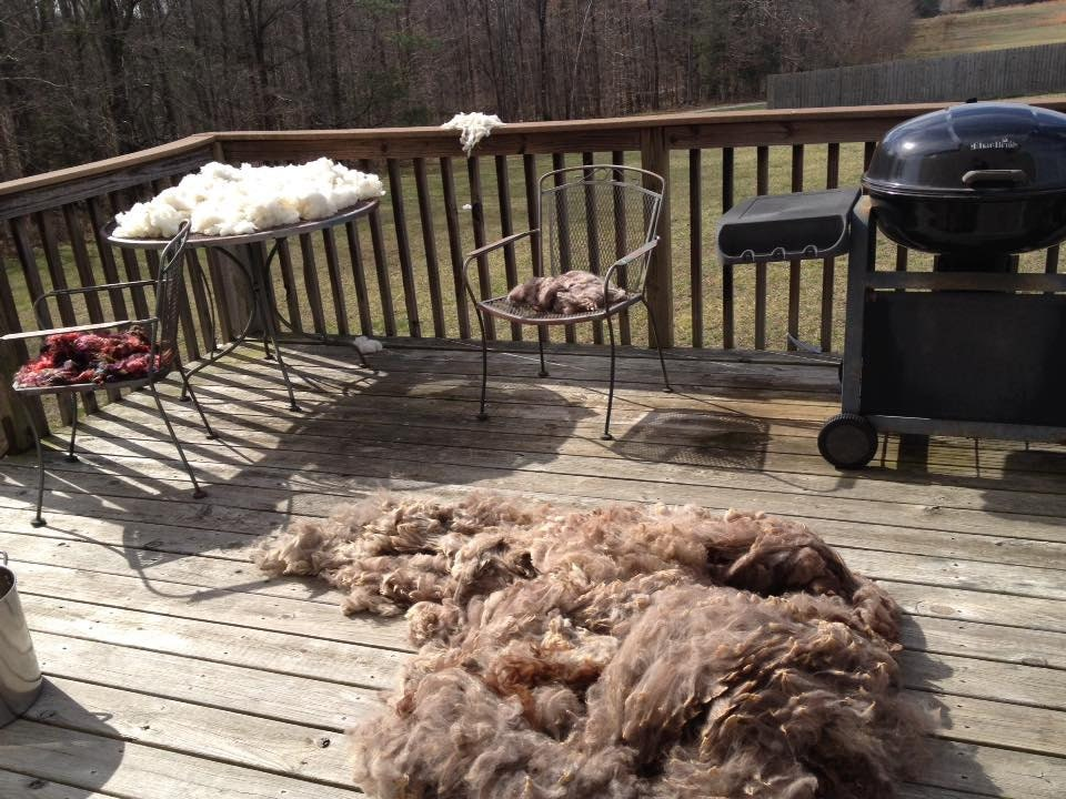 Mohair in chairs, Hogs Island sheep on table, and alpaca on decking
