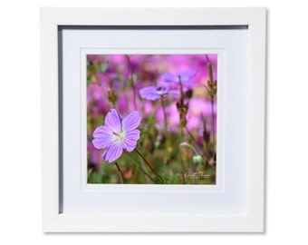 Geranium Flower Photo Print or Canvas